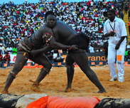 Combat en vue Gris /Mod'Lo : Pape Abdou Fall obtient l'aval des deux camps